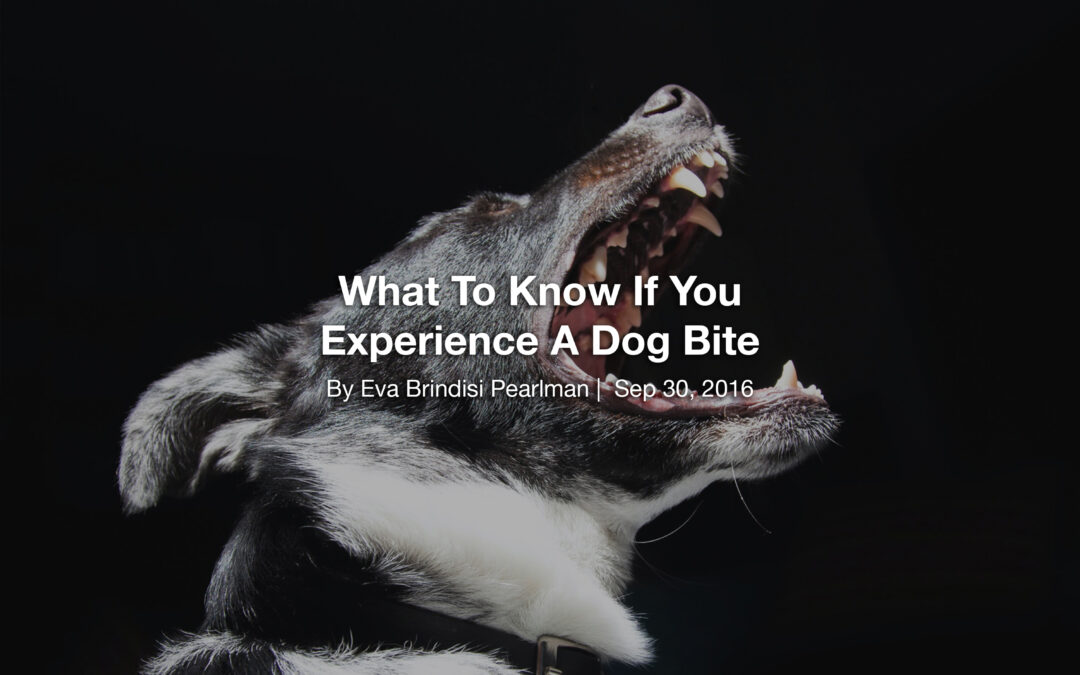 What To Know If You Experience A Dog Bite