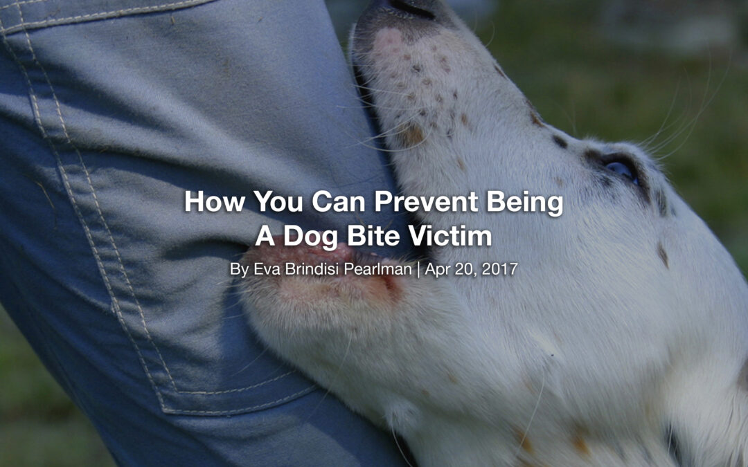 How You Can Prevent Being A Dog Bite Victim